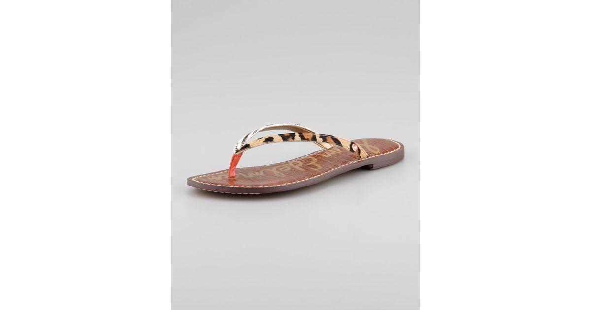 b9bcf76a65b0c Lyst - Sam Edelman Gracie Animalprint Calf Hair Thong Sandal