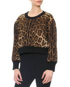 Dolce & Gabbana Leopard-Print Top With Knit Collar & Cuffs - Lyst