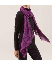 Hobbs | Purple Sketch Rose Scarf | Lyst