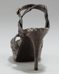 Saint Laurent - Brown Tribute Python Snake-ornament Sandal, 4 Heel - Lyst