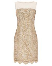 Coast - Metallic Coast Duanna Lace Dress Gold - Lyst