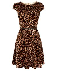 Oasis | Brown Animal Belted Fit Flare Knit Dress | Lyst