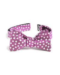 Ted Baker - Pink 'tosses Dots Ii' Silk Bow Tie for Men - Lyst
