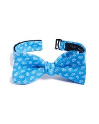 Ted Baker | Blue Paisley Cotton Bow Tie for Men | Lyst