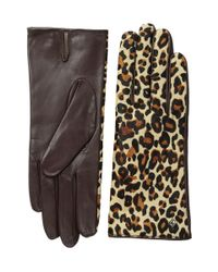 Cole Haan | Multicolor Haircalf Back Leather Glove | Lyst