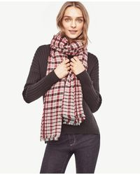 Ann Taylor | Pink Checked Fringe Scarf | Lyst