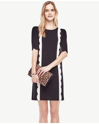 Ann Taylor | Black Petite Scalloped Sweater Dress | Lyst