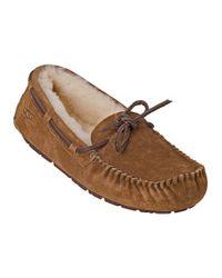 Ugg | Brown Dakota Slipper Chestnut Suede | Lyst