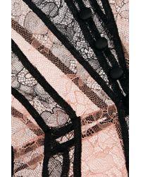 Agent Provocateur - Black Saffi Paneled Stretch-leavers Lace Bodysuit - Lyst