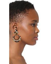 Erickson Beamon - Multicolor Imitation Pearl Safari Hoop Earrings - Lyst
