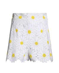 Dolce & Gabbana - White Floral-appliquéd Cotton-blend Tulle Shorts - Lyst