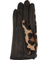 Agent Provocateur - Leopardprint Calf Hair Driving Gloves - Lyst