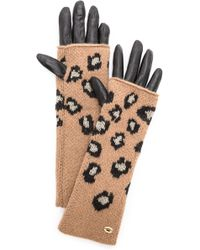 Juicy Couture - Leopard Mitt Gloves - Lyst