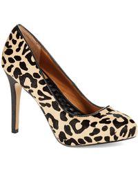 Dv By Dolce Vita Graysen Leopard Pumps - Lyst
