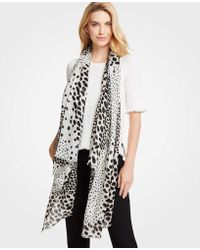 Ann Taylor - Spotted Scarf - Lyst
