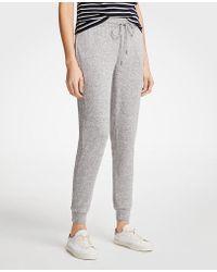 Ann Taylor - Petite Marled Knit Jogger Pants - Lyst