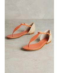 Guilhermina - Raffia Thong Sandals - Lyst