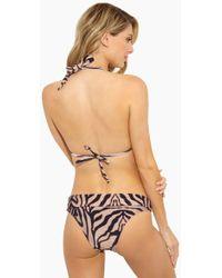 Rosa Cha - Carla Cheeky Bikini Bottom - Tiger Print - Lyst