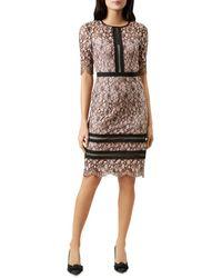 Hobbs Penny Lace Sheath Dress - Pink