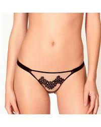 Bluebella - Elody Bikini Brief - Lyst