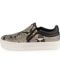 Ash Jordy Snake-print Sneaker - Lyst