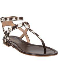Gianvito Rossi Zebra Tstrap Flat Sandals - Lyst