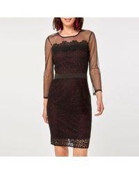 Dorothy Perkins - Wine Geometric Lace Mesh Sleeve Pencil Dress - Lyst