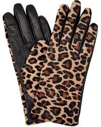 Hobbs - Multicoloured 'emma' Gloves - Lyst