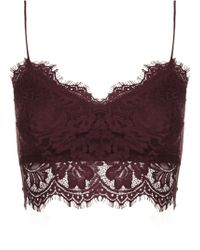Topshop Womens Petite Lace Bralet Mulberry - Lyst