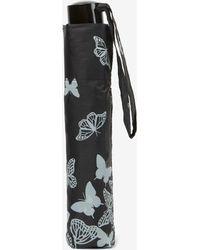 Dorothy Perkins - Stencil Butterfly Umbrella - Lyst