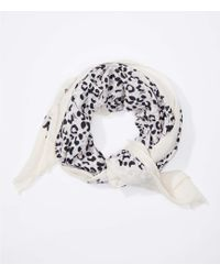 LOFT - Spotted Scarf - Lyst