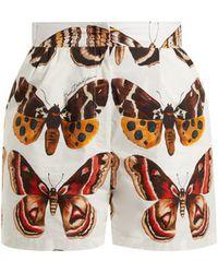 Dolce & Gabbana - Butterfly-print Cotton-poplin Shorts - Lyst