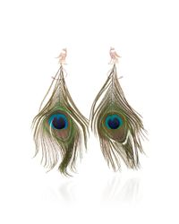 Wendy Yue - Peacock Feather Earrings - Lyst