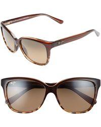 Maui Jim Starfish 56mm Polarized Cat Eye Sunglasses - Clear Chocolate/ Tortoise - Brown