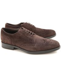 Business shoes suede Hole pattern Logo brown Tod's CblOrbKXIc
