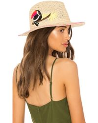 Hat Attack - Toucan Fedora - Lyst