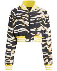 Roberto Cavalli - Zebra Print Bomber Jacket - Lyst