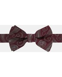 Ted Baker - Paisley Silk Bow Tie - Lyst