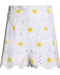Dolce & Gabbana - Floral-appliquéd Cotton-blend Tulle Shorts - Lyst