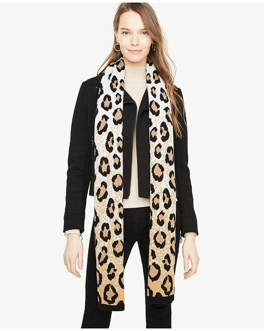 Ann Taylor | Black Cheetah Blanket Scarf | Lyst