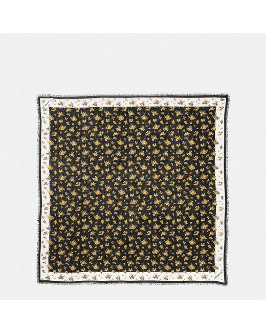 COACH | Black Punk Roses Oversized Square | Lyst