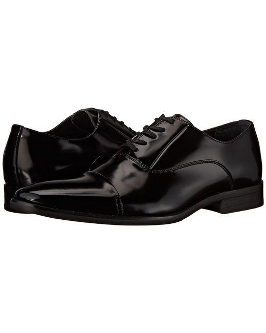 Calvin Klein   Black Radley for Men   Lyst