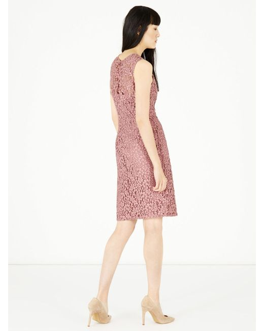 Warehouse Lace Ruffle Dress In Blue (Light Pink)