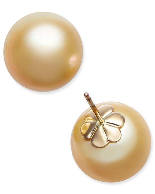 Macy's | Metallic Cultured Golden South Sea Pearl (13mm) Stud Earrings In 14k Gold | Lyst