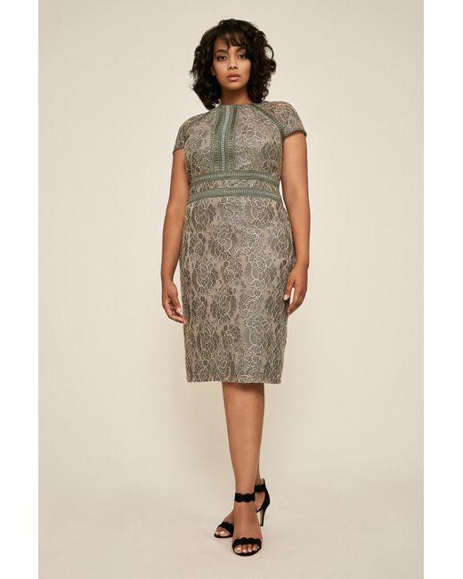 c96fe7ca39c14 Tadashi Shoji - Multicolor Runyon Lace Embroidered Dress - Plus Size - Lyst  ...