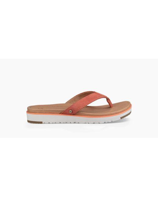 Ugg - Multicolor Women's Lorrie Flip Flop - Lyst