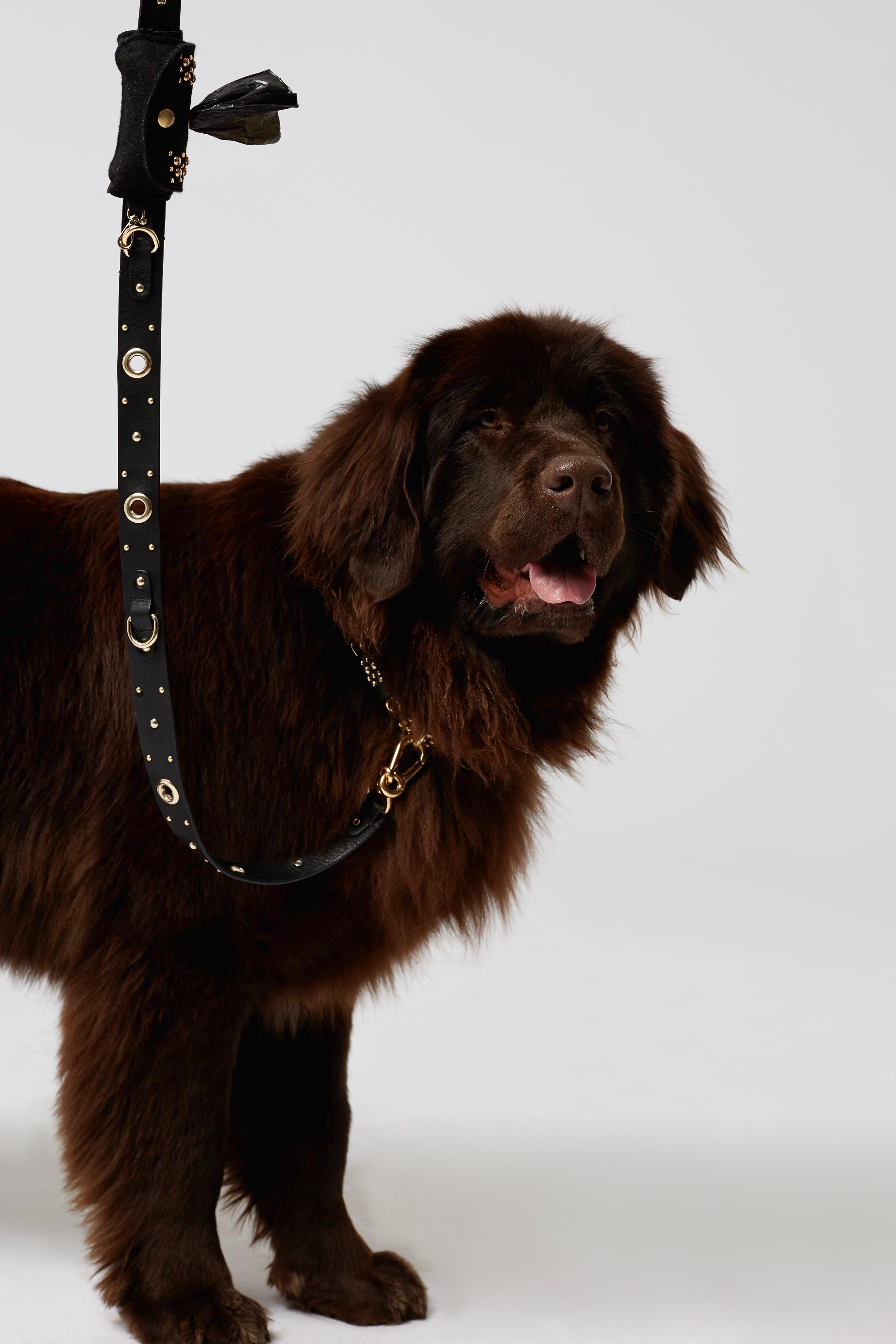 69bef40457c Dorothee Schumacher Clean-to-go Doggy Bag Dispenser Pouch in Black ...